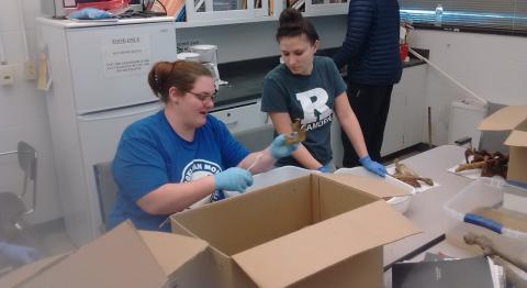 Amanda Gonzalez & Laura Malek wash bones at Rutgers-Camden